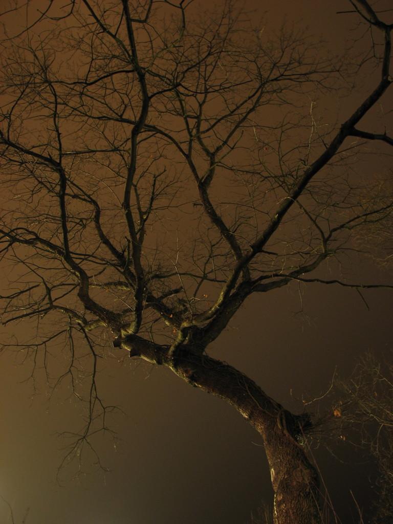 -- Tim's tree again...